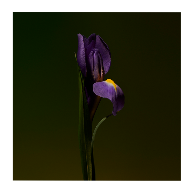 Iris Shot Extract 100 <span class='min_ml'> ML</span>